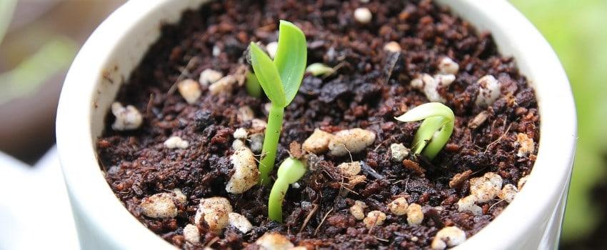 Nutze die Zeit des Wachstums